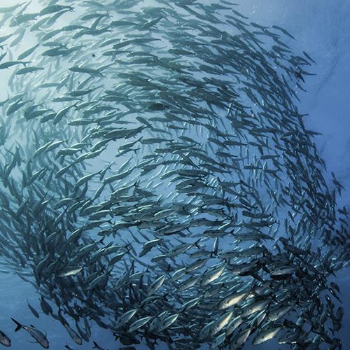 POHiD popiera działania EuroCommerce i MSC na rzecz zrównoważonego zarządzania zasobami morskimi